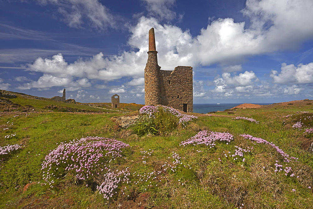 Thrift growing around the ruins of Wheal Owles tin mine on the cliff tops near Botallack, Cornwall, England, United Kingdom, Europe