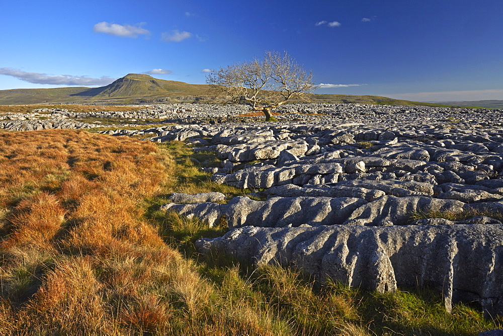 Ingleborough seen from the limestone pavement on Twistleton Scar, Yorkshire Dales National Park, North Yorkshire, England, United Kingdom, Europe