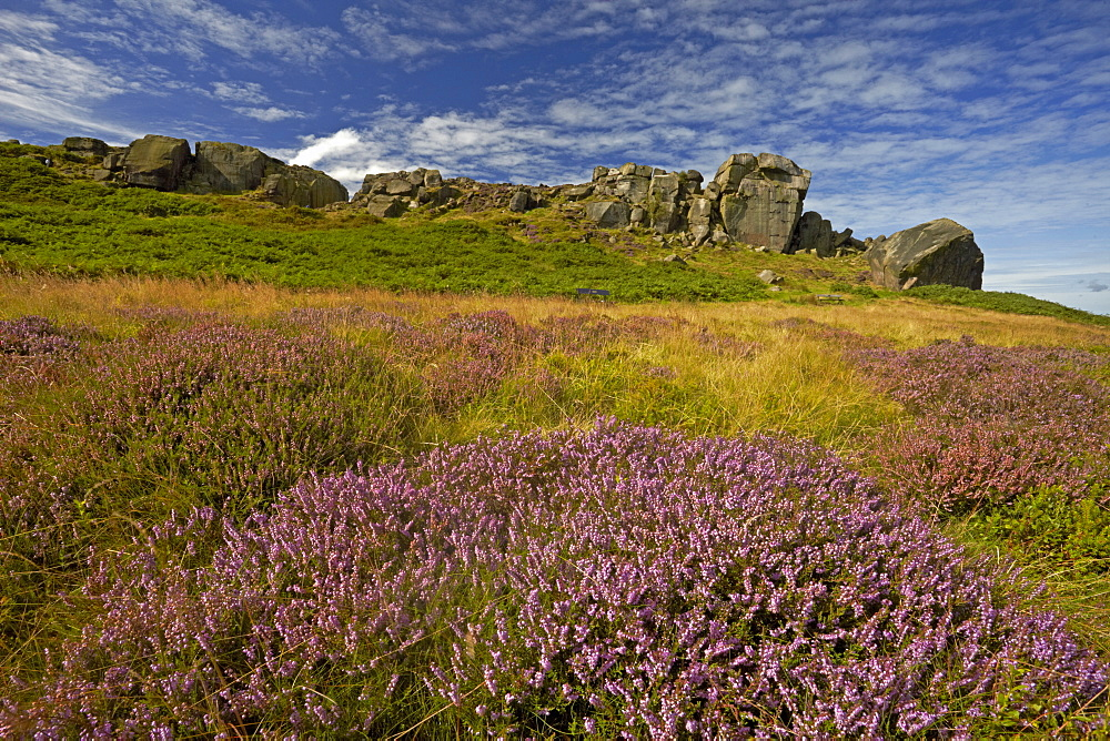 The Cow and Calf rocks and heather covered Ilkley Moor in late summer, West Yorkshire, England, United Kingdom, Europe - 1298-82