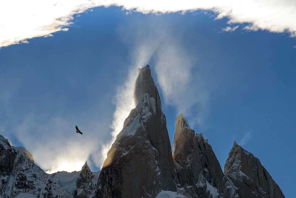 Condor flying at Cerro Torres, Los Glaciares National Park, UNESCO World Heritage Site, Santa Cruz Province, Patagonia, Argentina, South America - 1306-251