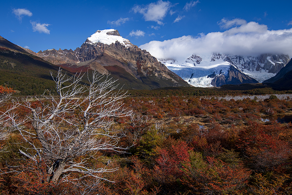Autumn colours on the way to Mount Fitz Roy, El Chalten, Santa Cruz province, Argentina, South America