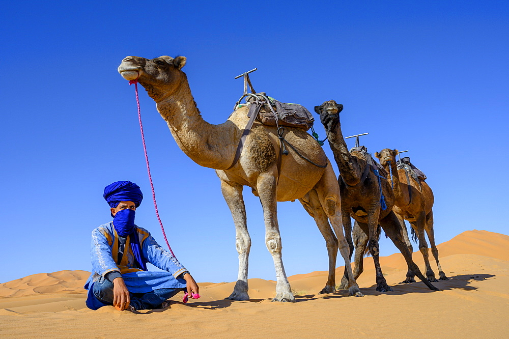 Berber and Camels, Sahara Desert, Morocco, North Africa