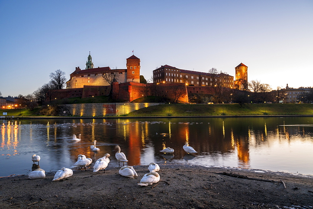 Wawel Hill Castle and Cathedral, Vistula River with swans, Krakow, Poland