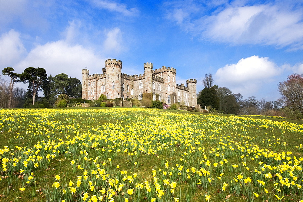 Daffodils at Cholmondeley Castle in Cheshire, England, United Kingdom