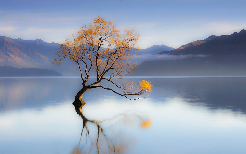 The Wanaka Tree, Otago Region, South Island, New Zealand, Pacific