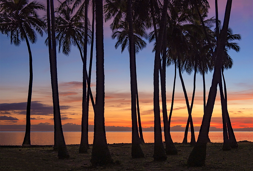 Sunset Kapuaiwa Coconut Grove at Ho'olehua, on the southern shores of the Molokai, Hawaii, United States of America