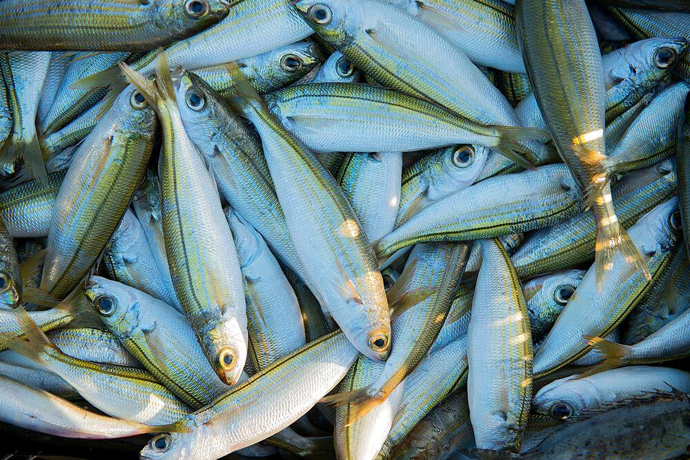 Sardines fresh in from the catch, Kalamies Beach, Protaras, Cyprus, Mediterranean, Europe - 1331-72