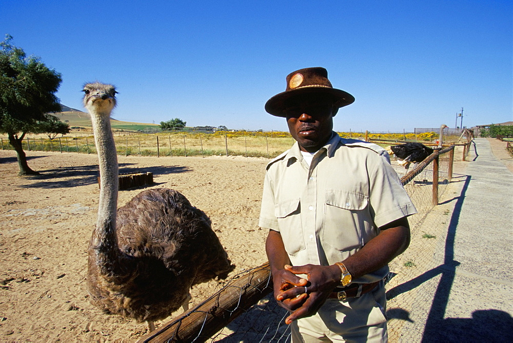 Ostrich Ranch, Tourist Farm, Africa