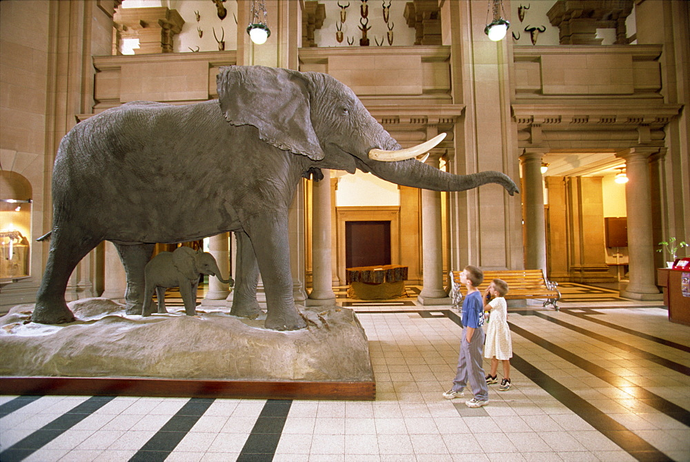 Transvaal Museum, Pretoria, South Africa, Africa - 142-5814