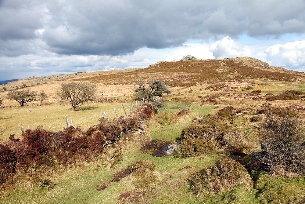 Moorland near Hound Tor, Dartmoor National Park, Devon, England, United Kingdom, Europe  - 166-5428