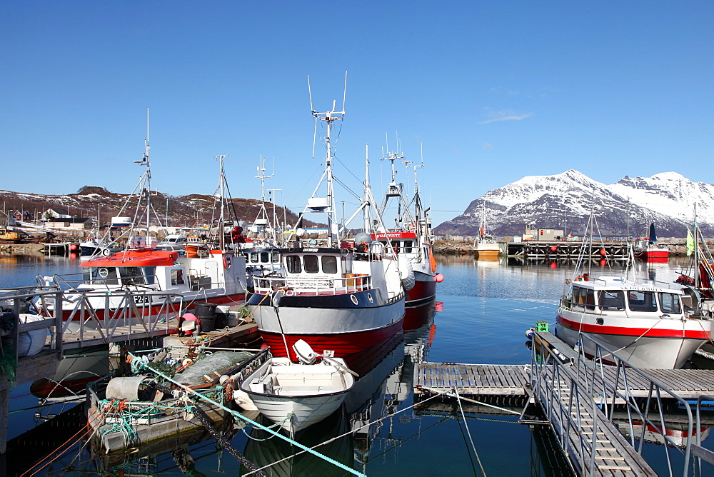 Fishing boats in Tomvik harbour, Kvaloya (Whale Island), Troms, Arctic Norway, Scandinavia, Europe - 166-5440