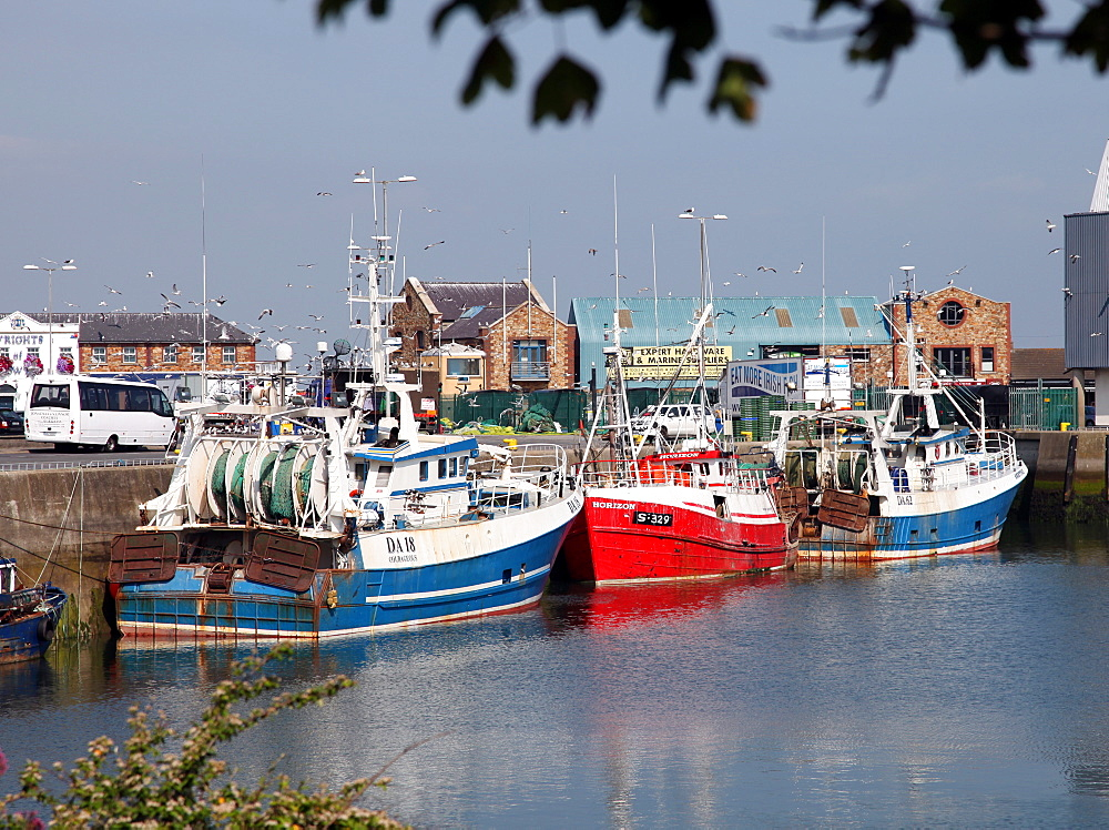 Trawlers, Howth harbour near Dublin, Republic of Ireland, Europe - 166-5465