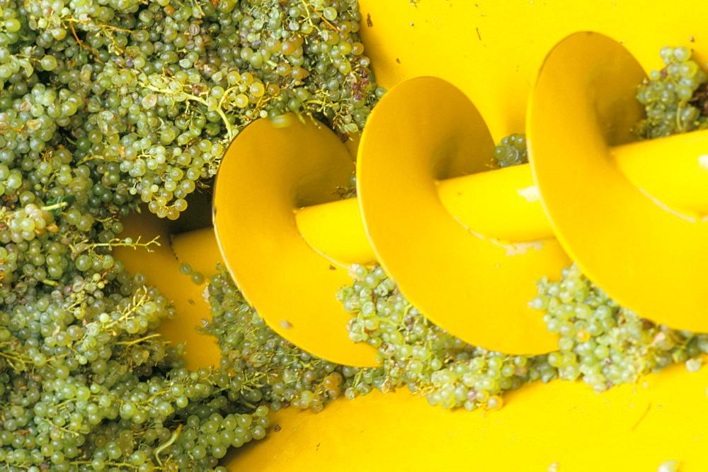 Close-up of grape crushing machine at the Soave co-operative, Soave, Veneto, Italy, Europe