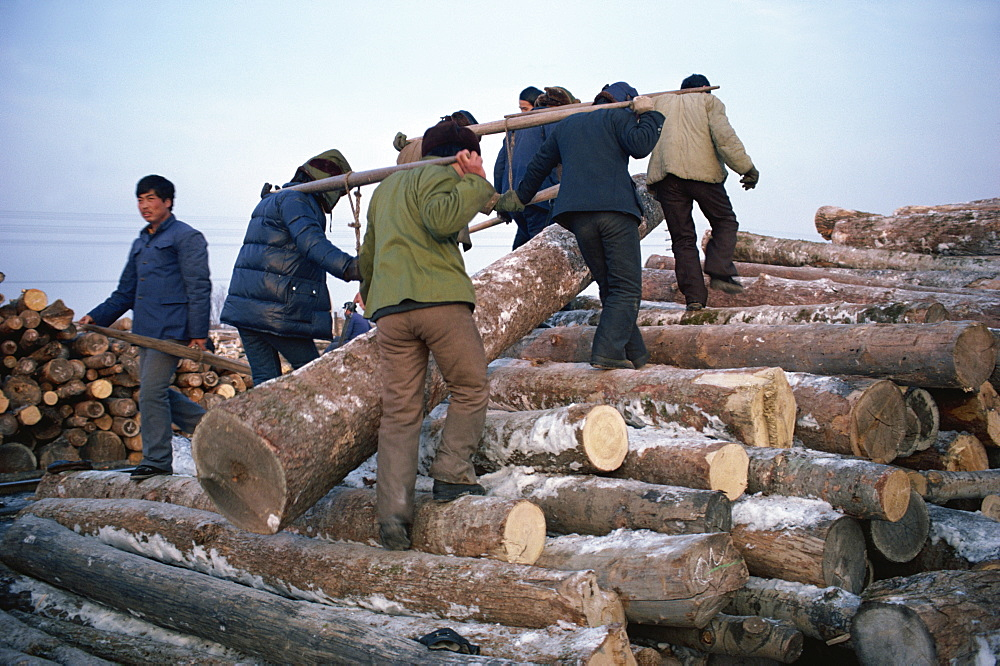 Logs being manhandled, Heilongjiang Province, north China, China, Asia