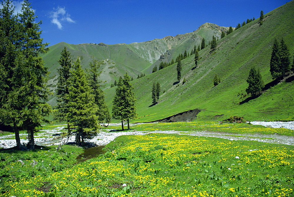 Wild flowers below the Tien Shan mountains in Xinjiang Province, China, Asia