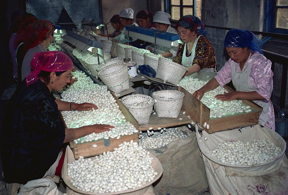 Silk factory, Xinjiang, China, Asia - 188-4960