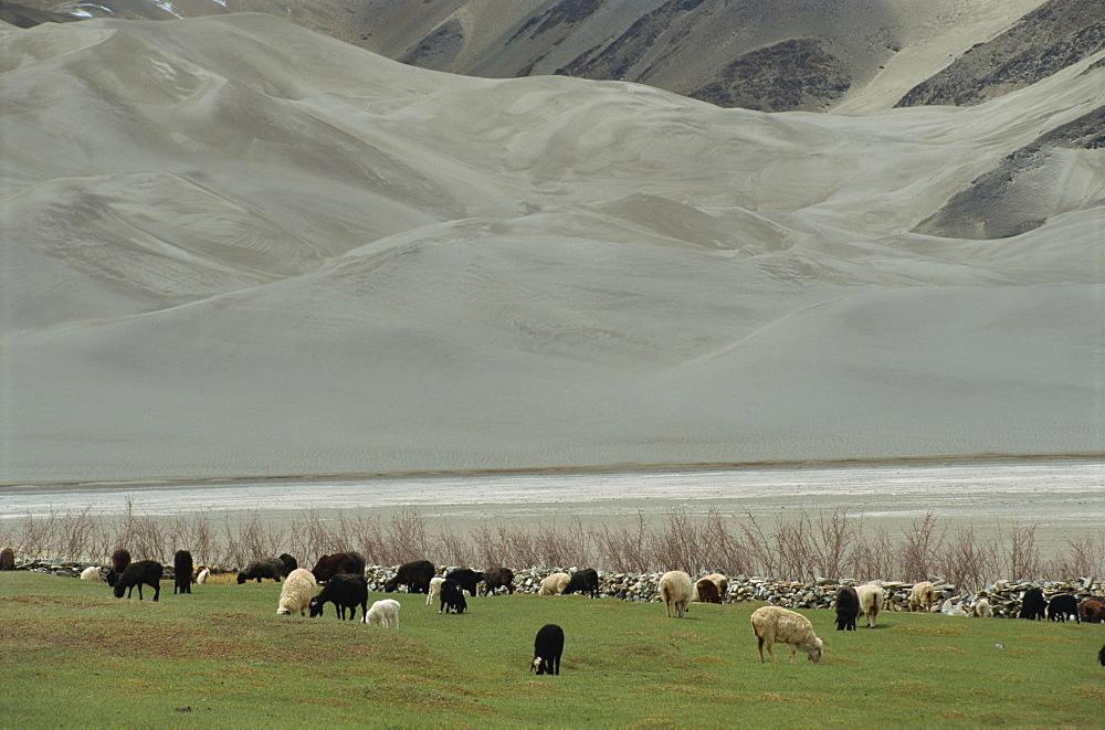 Scenery by the Karakoram Highway, Xinjiang, China, Asia - 188-6139
