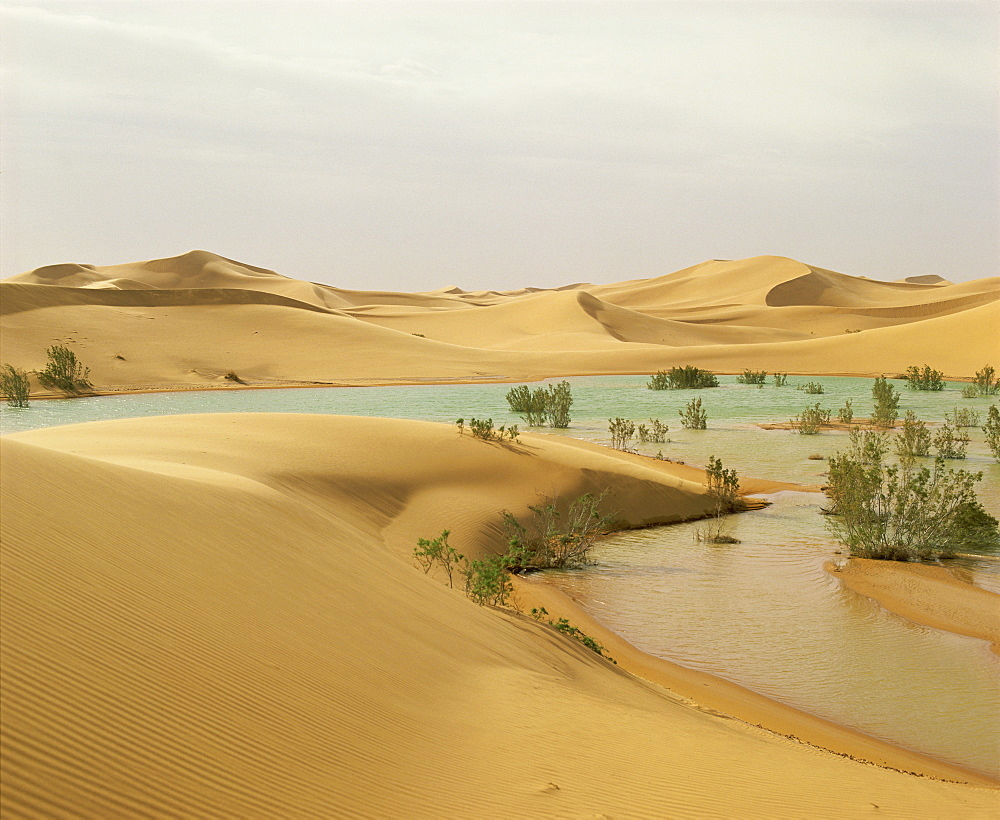 Flood waters in Algerian Sahara, at edge of Grand Erg Occidental, south of El-Golea, Algeria, North Africa, Africa - 197-1860