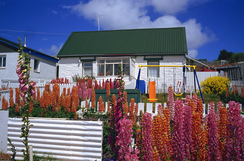 Typical residence, Stanley, Falkland Islands, South America - 197-4505