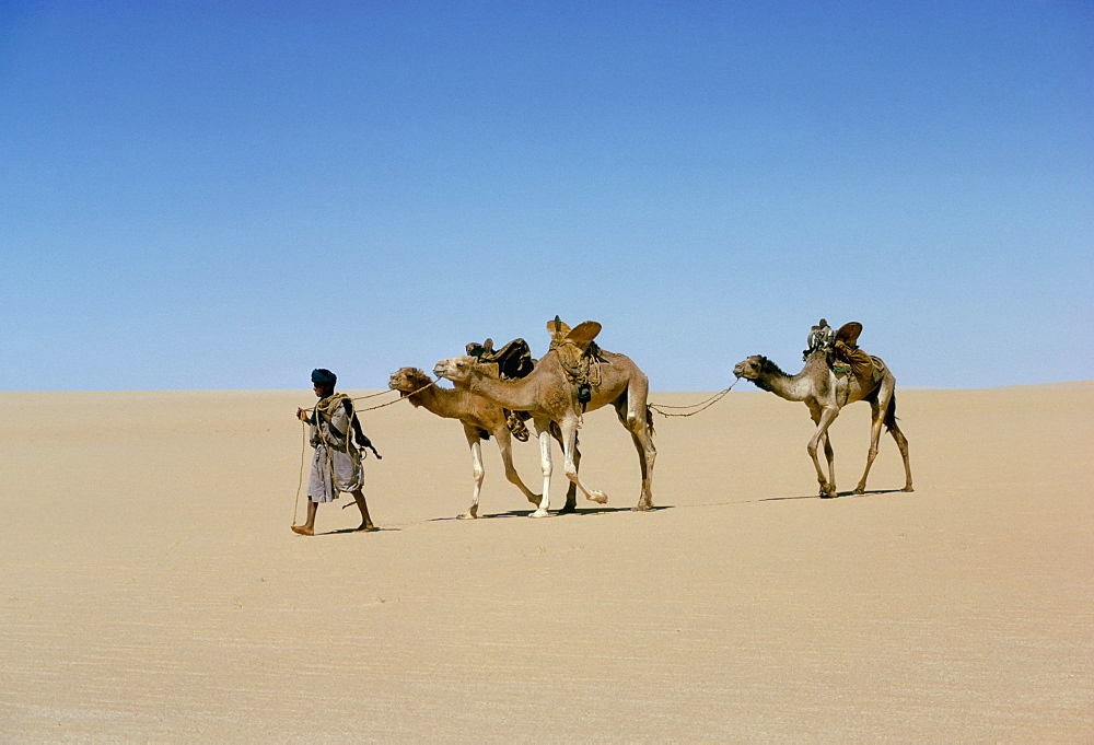 Part of escort to camel train in Empty quarter of Mauritania-Mali, Africa