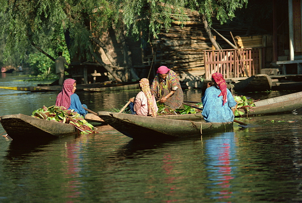 Kashmiri women, Dal Lake, Srinagar, Kashmir, India, Asia - 2-11679