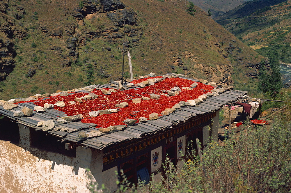 Chillies drying on roof, Bhutan, Asia - 2-17714