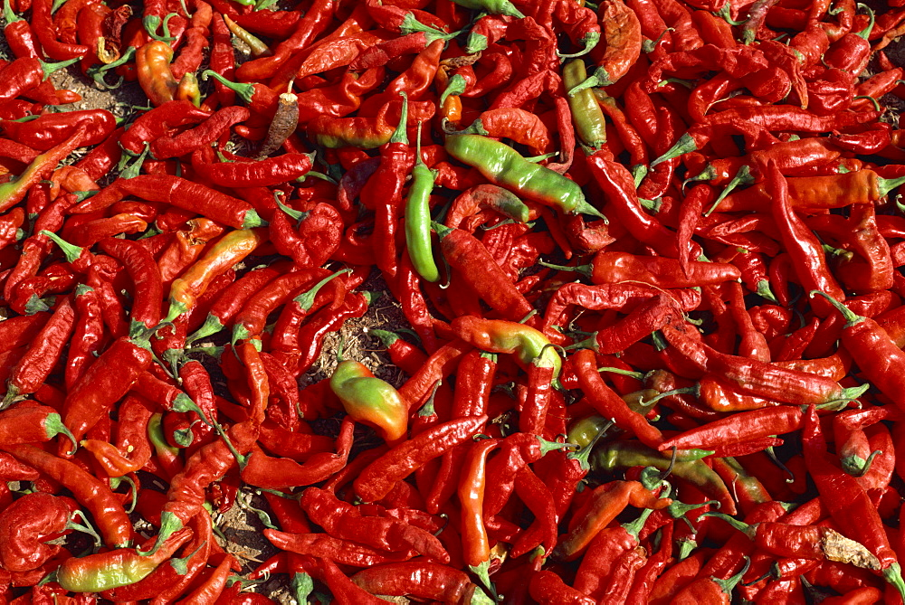 Close-up of chillies, Rajasthan state, India, Asia - 2-17739