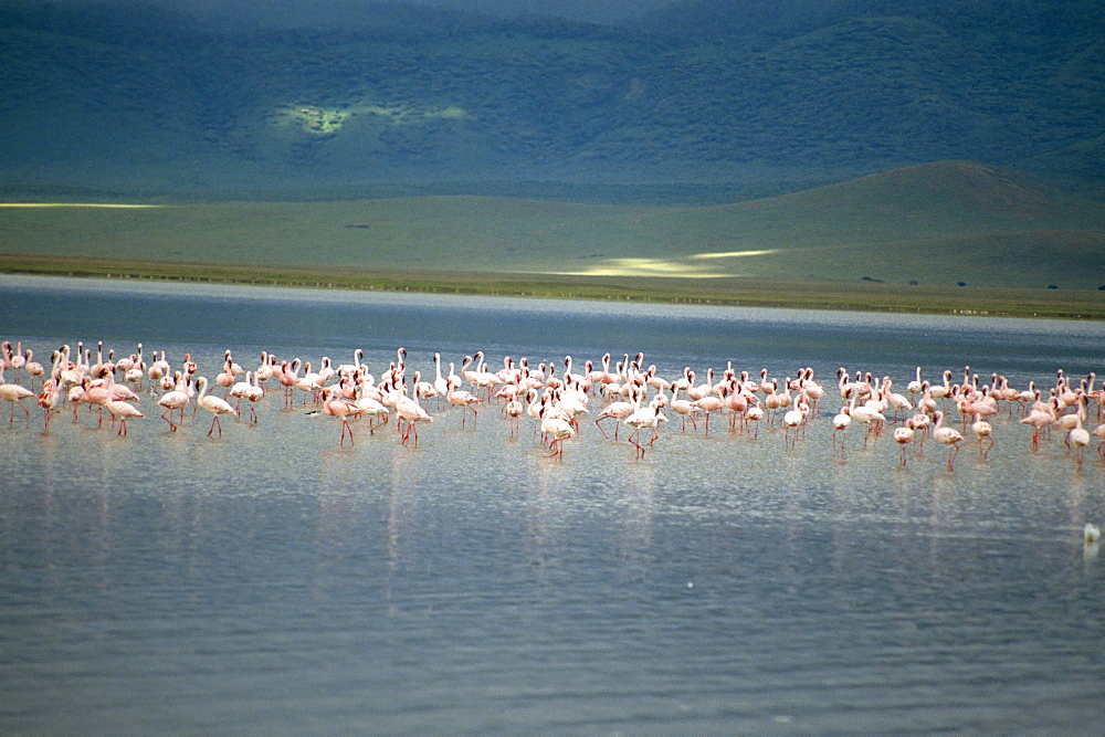 Flamingoes, Serengeti National Park, UNESCO World Heritage Site, Tanzania, East Africa, Africa - 2-19665