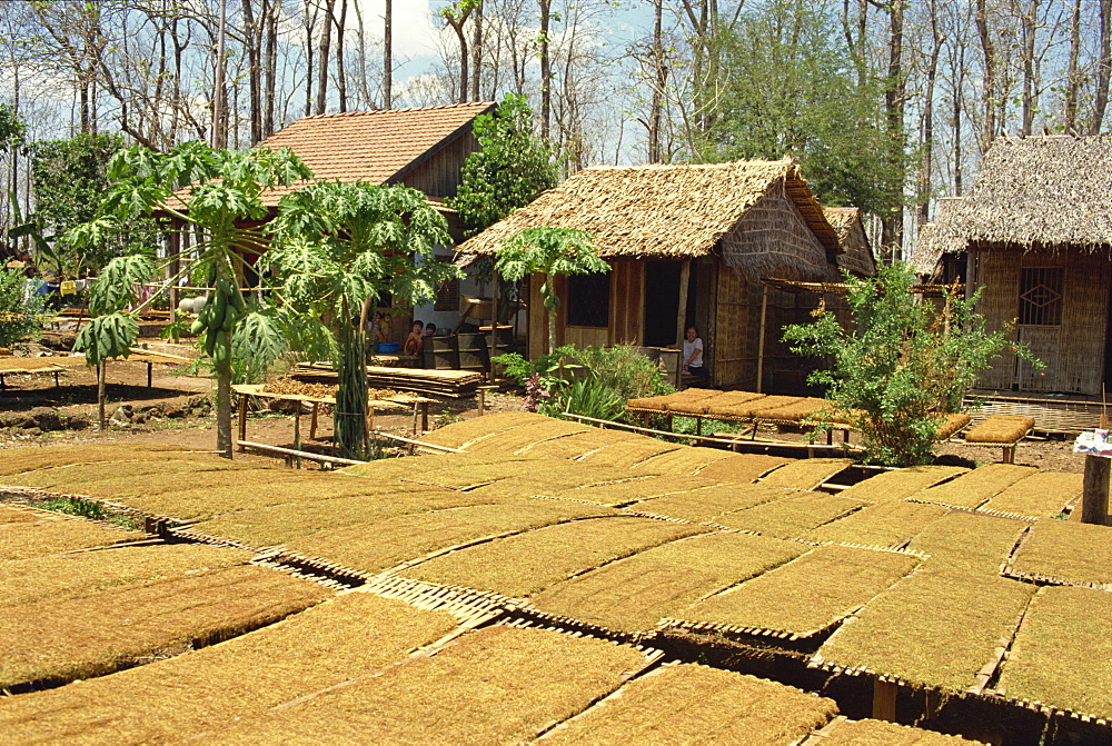 Tobacco drying outside, near Dalat, South Vietnam, Vietnam, Indochina, Southeast Asia, Asia - 2-19977