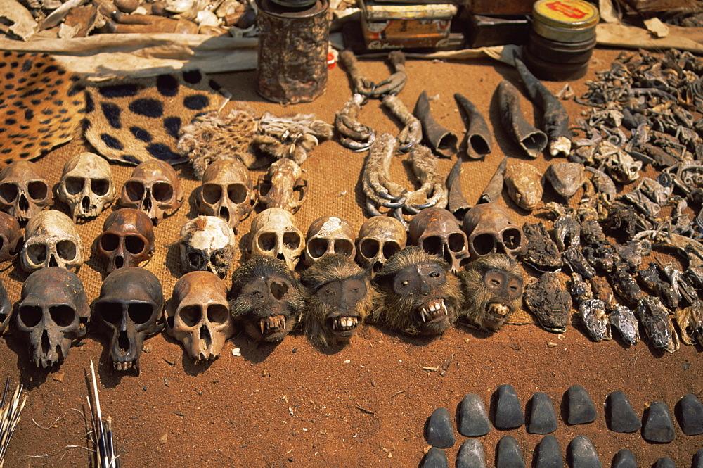 Primate skulls for sale in the market at Vogan, Togo, West Africa, Africa - 225-3519