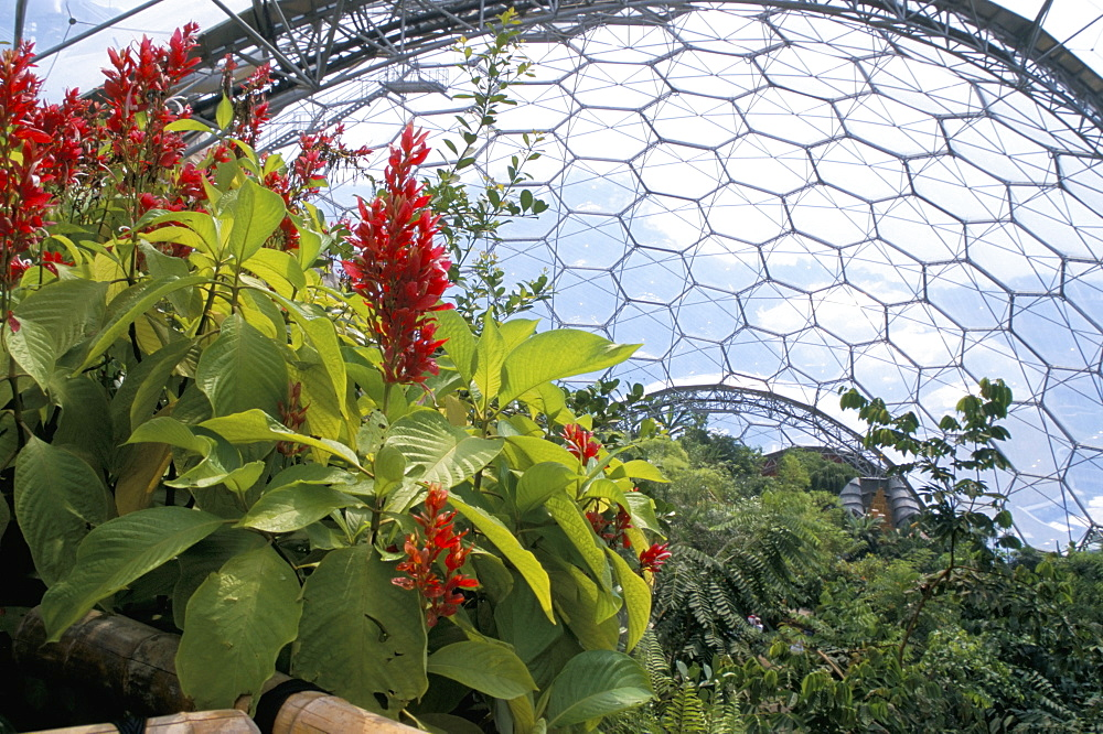Inside the Humid Tropics biome, the Eden Project, Cornwall, England, United Kingdom, Europe