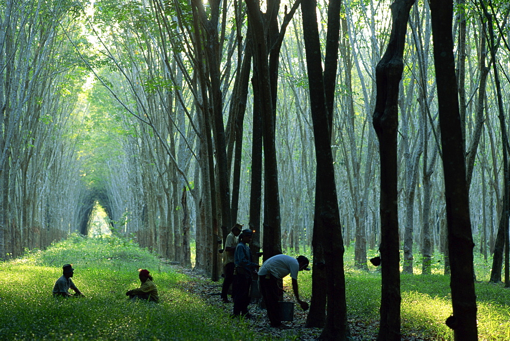 the myanmar rubber plantation essay Latest research from the world bank on development in myanmar, including reports, studies, publications, working papers and articles.