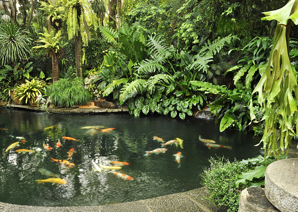 Koi fish pond, Manila, Philippines, Southeast Asia, Asia