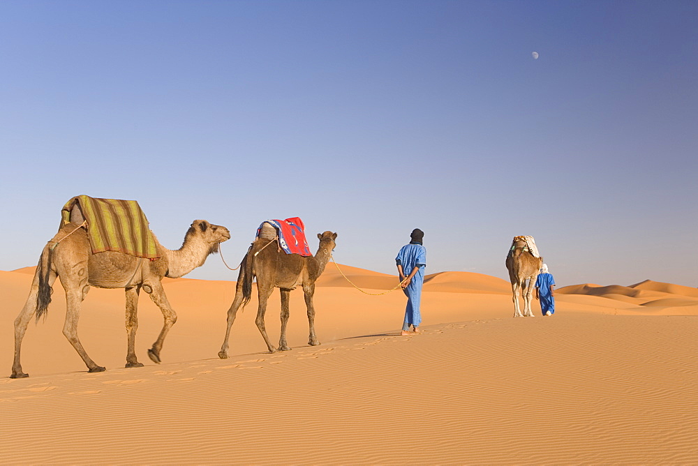 Camels, Erg Chebbi, Merzouga, Sahara Desert, Morocco, North Africa, Africa