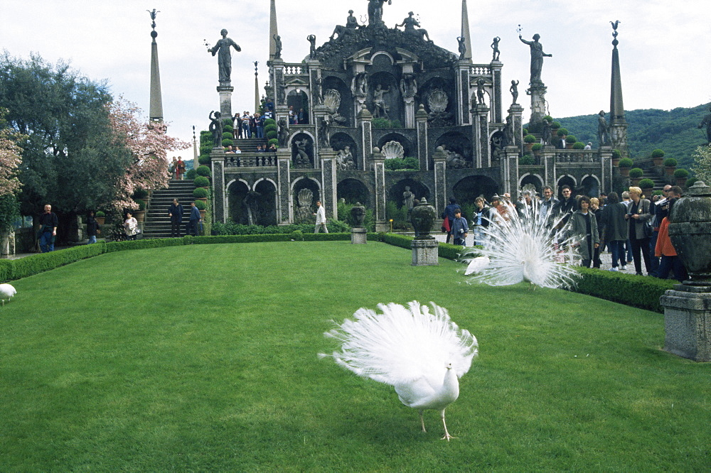 White peacocks in front of folly, Isola Bella, Lake Maggiore, Piedmont, Italy, Europe