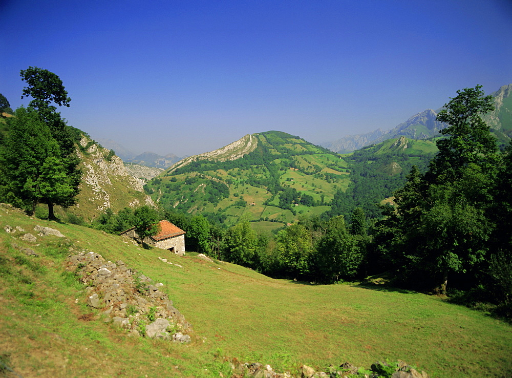Sierra Dobros, Picos de Europa mountains, (Green Spain), Asturias, Spain - 255-4611
