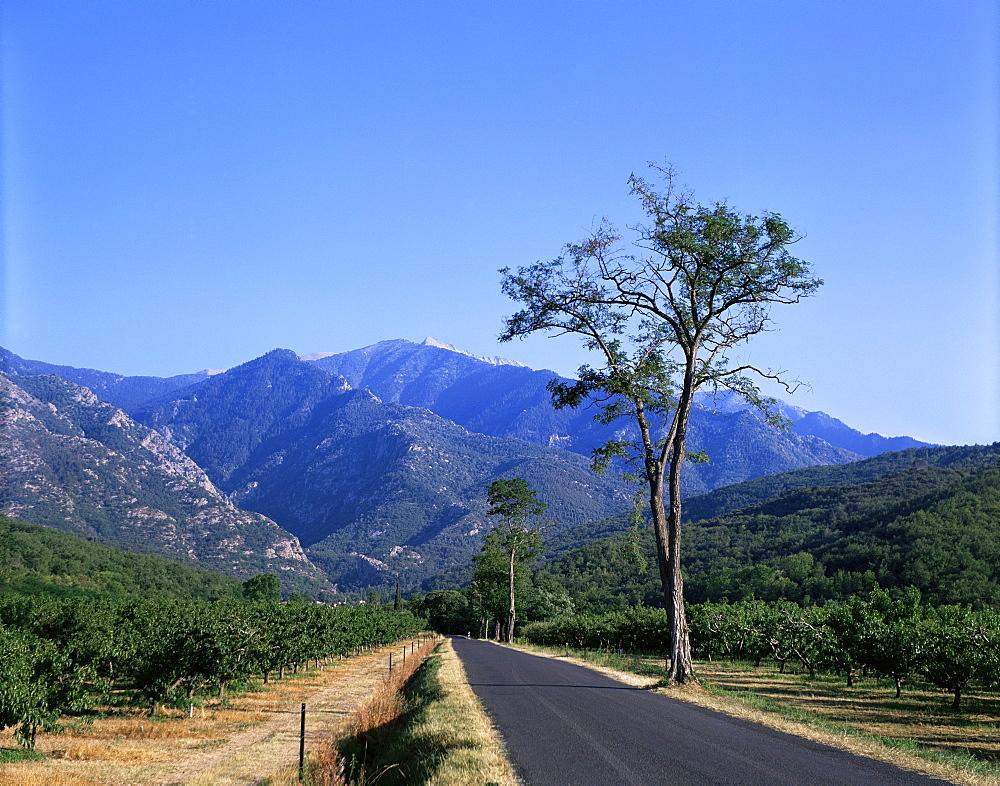 Mount Canigou, Pyrenees-Orientale, Languedoc Roussillon, France, Europe