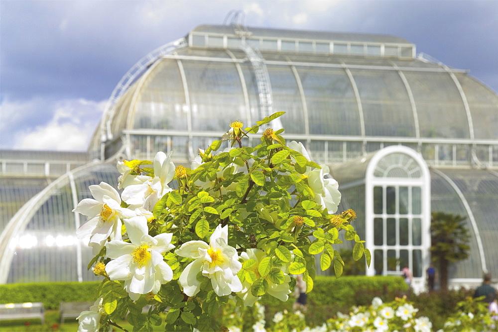 The Palm House conservatory, Royal Botanic Gardens, Kew, UNESCO World Heritage Site, London, England, United Kingdom, Europe