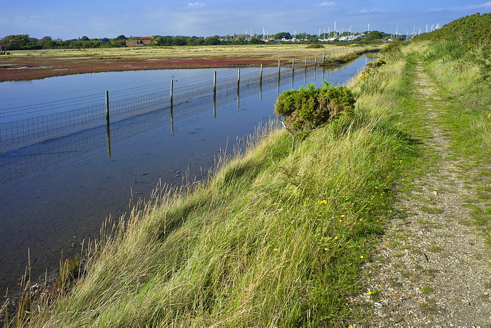 View of salt marshes from the Solent Way footpath, New Forest National Park, Lymington, Hampshire, England, United Kingdom, Europe - 255-8956