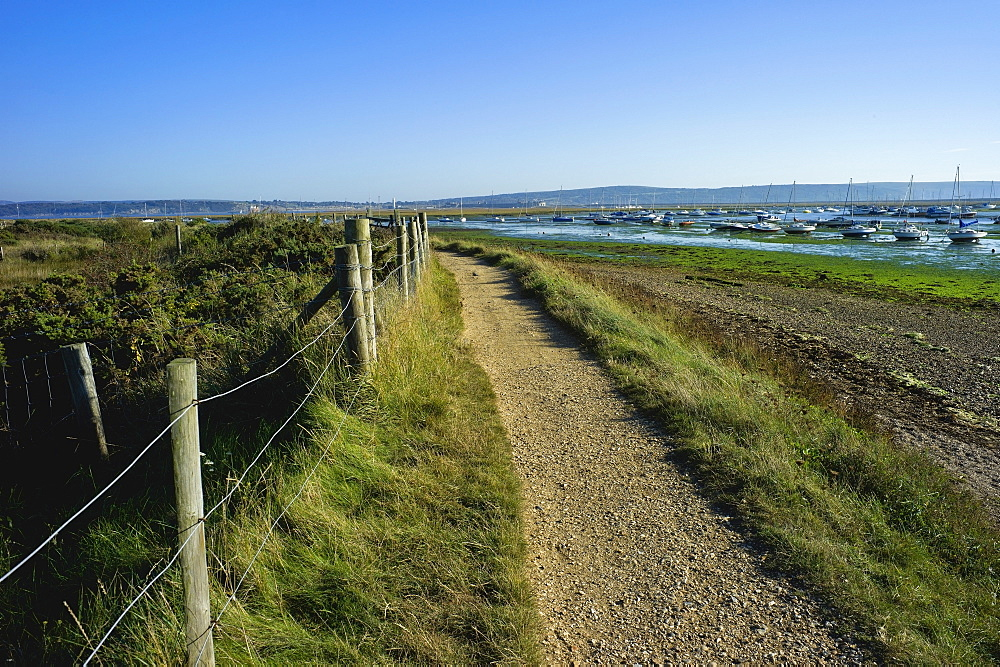 Salt marsh and the Hampshire coast, Hurst Spit, Keyhaven, Hampshire, England, United Kingdom, Europe - 255-8961