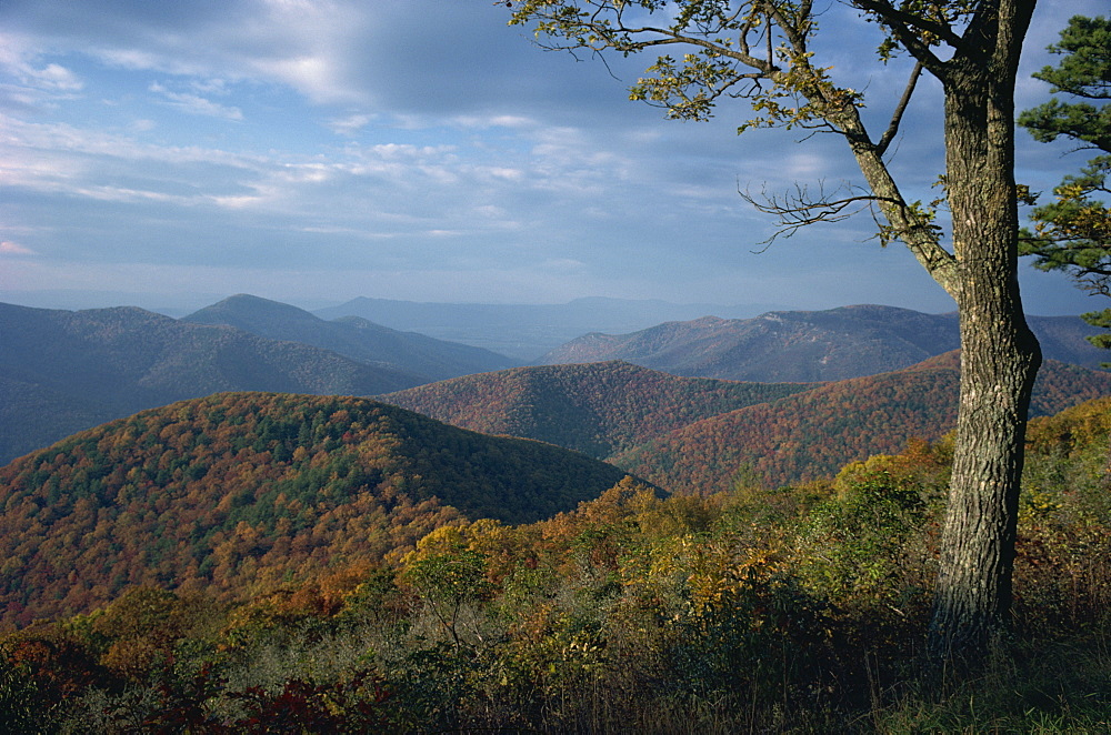 Hills near Loft Mountain in autumn in the Shenandoah National Park, Virginia, United States of America, North America