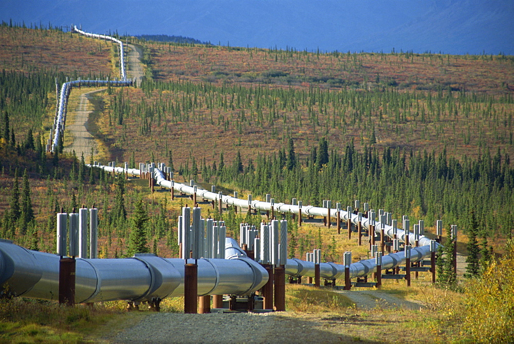 The Trans Alaska Oil Pipeline running on refrigerated support to stop oil heat melting the permafrost, Alaska, United States of America, North America - 29-1494