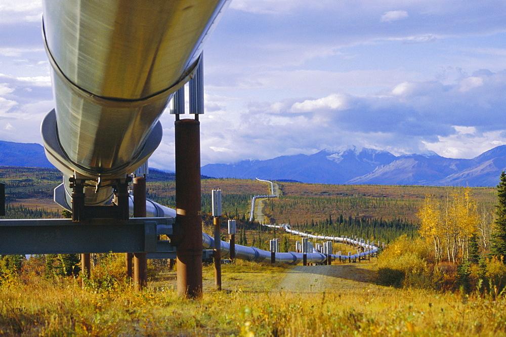 Trans Alaska oil pipeline across taiga through Alaskan Range carried on insulated ground piles, Alaska, USA - 29-1498