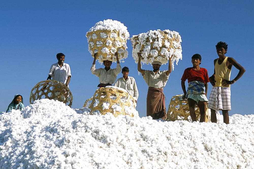 Mill workers on pile of raw cotton balls on Deccan plateau, near Aurangabad, Maharashtra, India, Asia - 29-4668