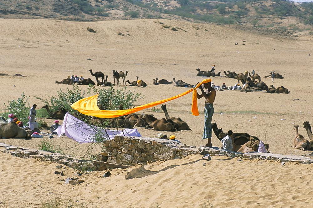 Hindu winds his yellow turban back on, camel fair, Pushkar, Rajasthan, India, Asia - 29-4669