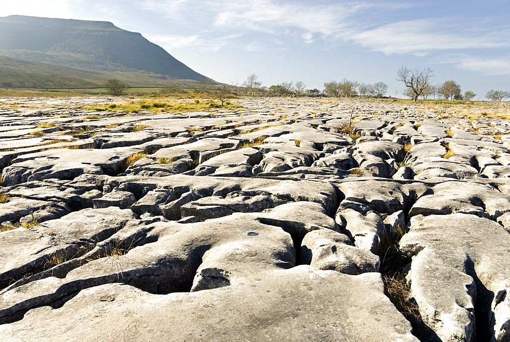 Limestone pavements above Southerscales Scars, Ingleborough, Yorkshire Dales, Yorkshire, England, United Kingdom, Europe