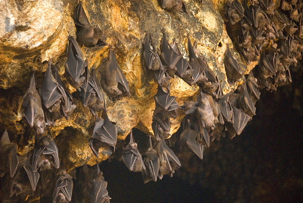 Bats on roof of cave chamber inside Purah Goa Lawah, Hindu Bat Temple cave, eastern Bali, Indonesia, Southeast Asia, Asia