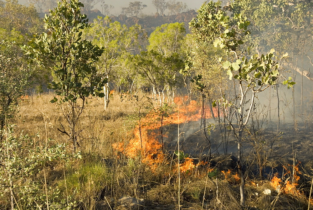 Advancing bush fire beside eastern section of Gibb River Road across The Kimberley, Western Australia, Australia, Pacific