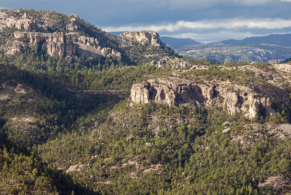 Volcanic plateau of Sierra Tarahumara, above Copper Canyon, Chihuahua, Mexico, North America - 29-5417