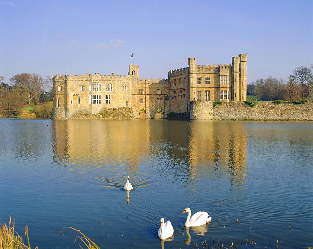 Swans in front of Leeds Castle, Kent, England